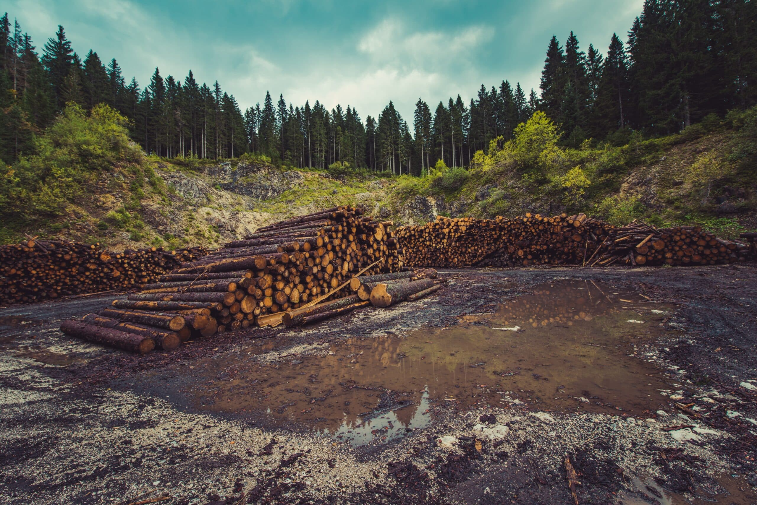 firewood on river